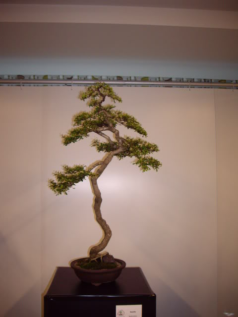 Photos of 6th World Bonsai Convention in PR IMGP6110_resize