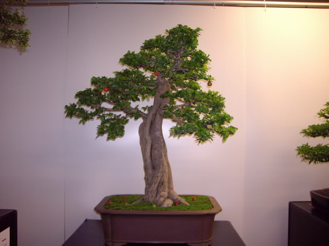 Photos of 6th World Bonsai Convention in PR IMGP6111_resize