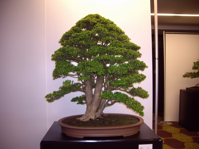 Photos of 6th World Bonsai Convention in PR IMGP6113_resize