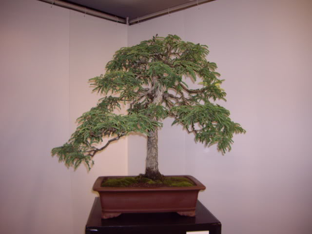 Photos of 6th World Bonsai Convention in PR IMGP6114_resize