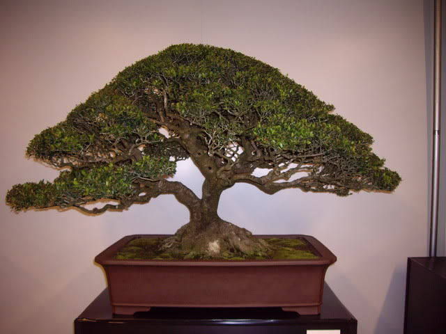 Photos of 6th World Bonsai Convention in PR IMGP6116_resize
