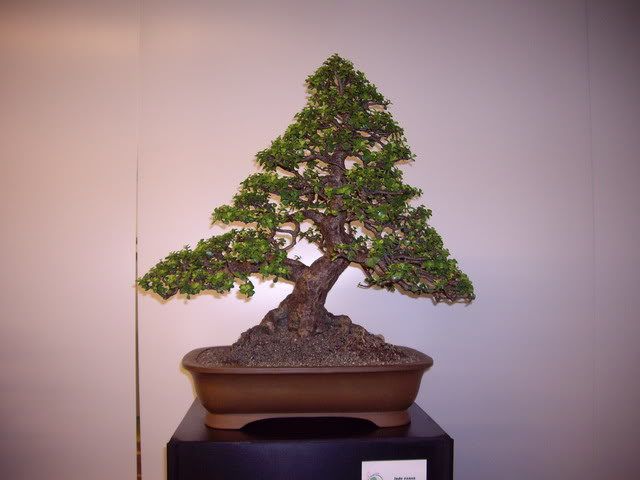 Photos of 6th World Bonsai Convention in PR IMGP6119_resize
