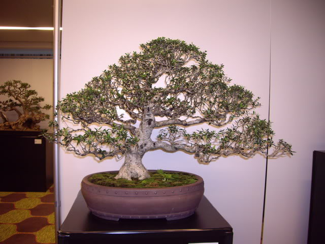 Photos of 6th World Bonsai Convention in PR IMGP6120_resize