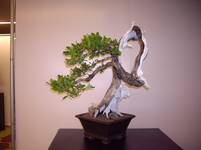 Photos of 6th World Bonsai Convention in PR IMGP6121_resize