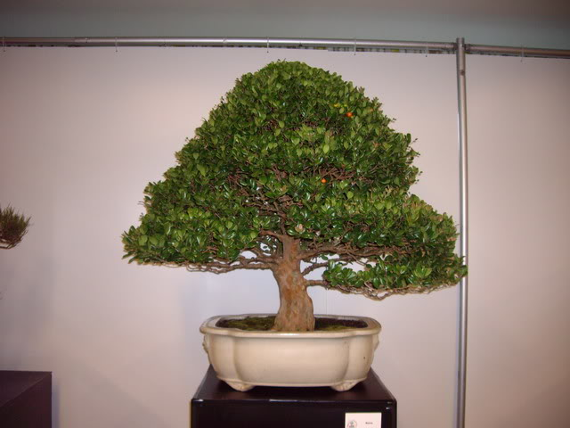 Photos of 6th World Bonsai Convention in PR IMGP6124_resize