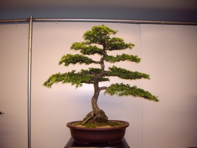 Photos of 6th World Bonsai Convention in PR IMGP6128_resize