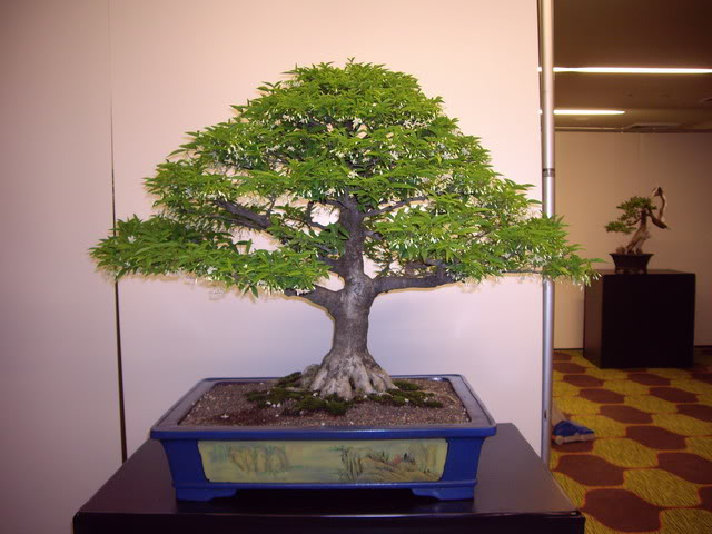 Photos of 6th World Bonsai Convention in PR IMGP6130_resize