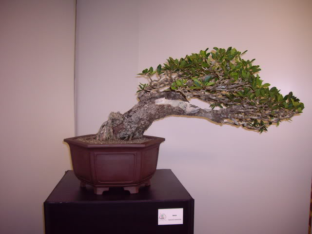 Photos of 6th World Bonsai Convention in PR IMGP6131_resize
