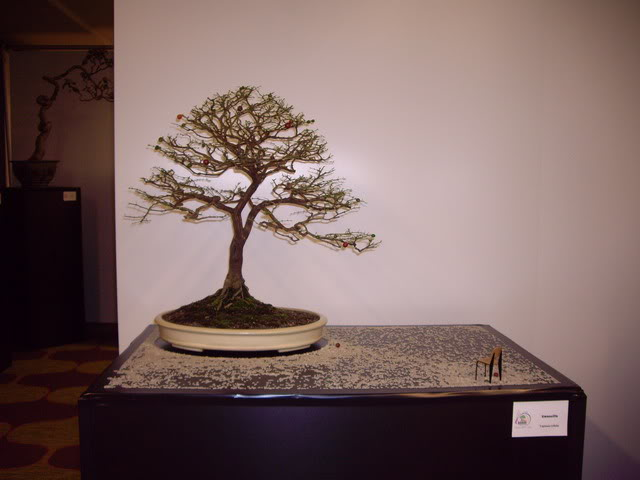 Photos of 6th World Bonsai Convention in PR IMGP6132_resize