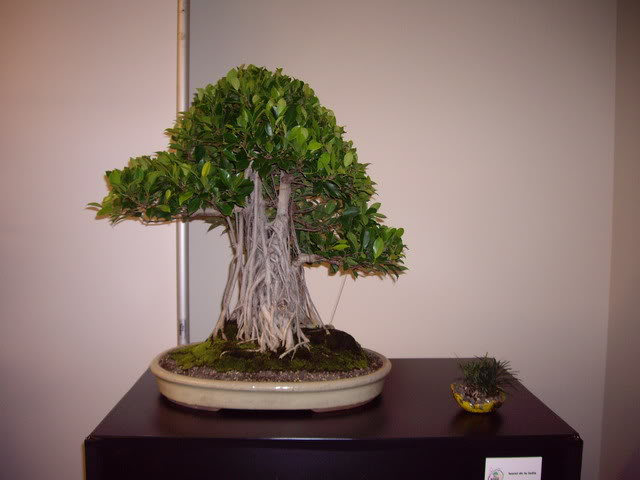 Photos of 6th World Bonsai Convention in PR IMGP6133_resize