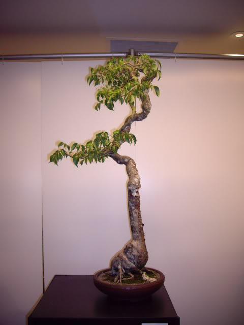 Photos of 6th World Bonsai Convention in PR IMGP6137_resize
