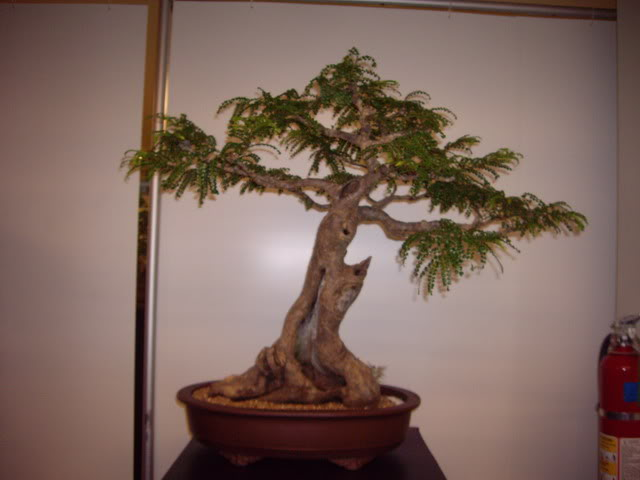 Photos of 6th World Bonsai Convention in PR IMGP6140_resize