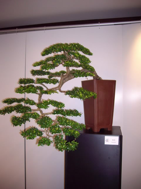Photos of 6th World Bonsai Convention in PR IMGP6146_resize