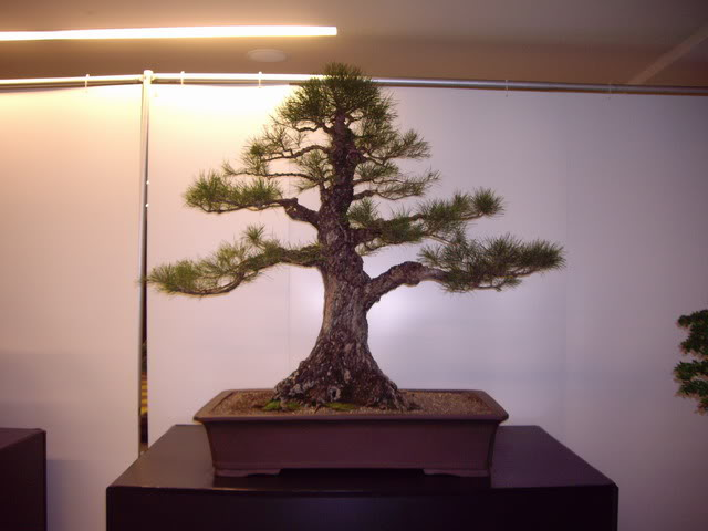 Photos of 6th World Bonsai Convention in PR IMGP6147_resize