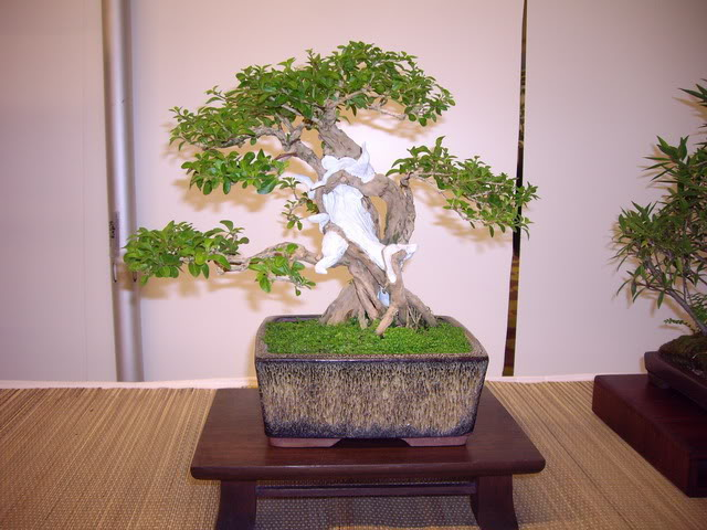Photos of 6th World Bonsai Convention in PR IMGP6155_resize