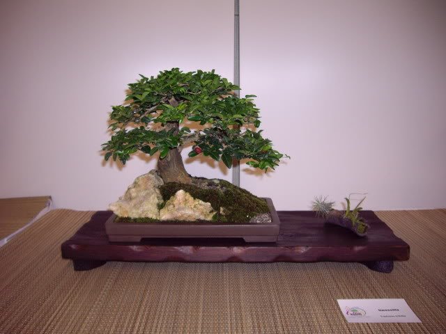 Photos of 6th World Bonsai Convention in PR IMGP6159_resize