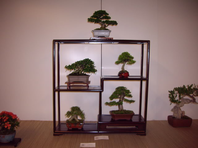 Photos of 6th World Bonsai Convention in PR IMGP6161_resize