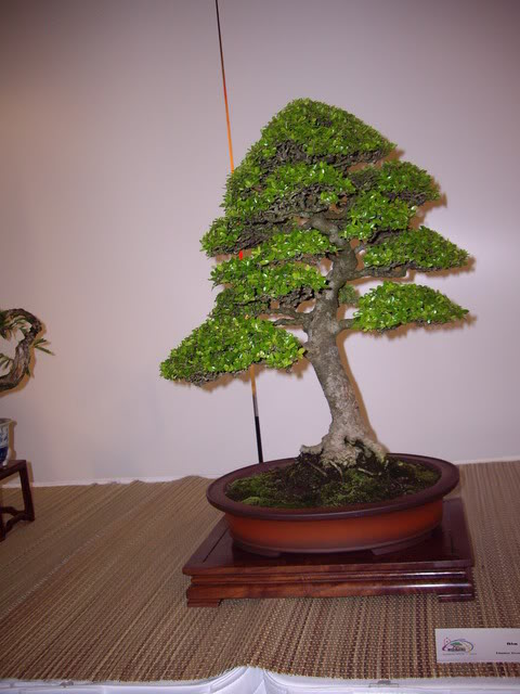 Photos of 6th World Bonsai Convention in PR IMGP6165_resize