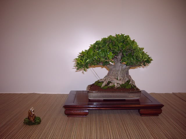 Photos of 6th World Bonsai Convention in PR IMGP6166_resize