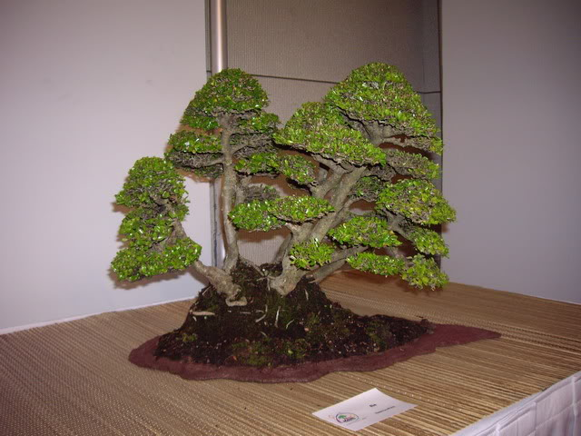 Photos of 6th World Bonsai Convention in PR IMGP6175_resize