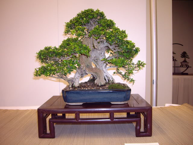 Photos of 6th World Bonsai Convention in PR IMGP6181_resize