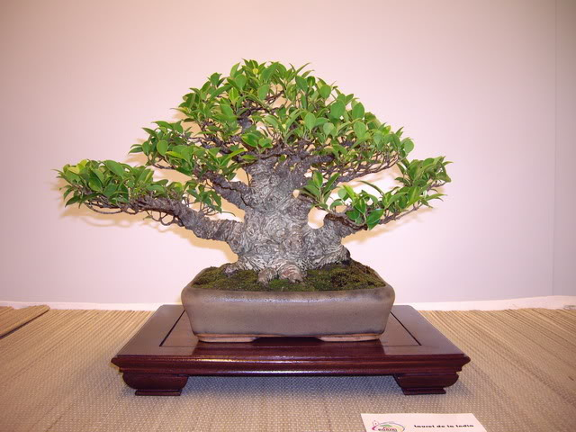 Photos of 6th World Bonsai Convention in PR IMGP6182_resize