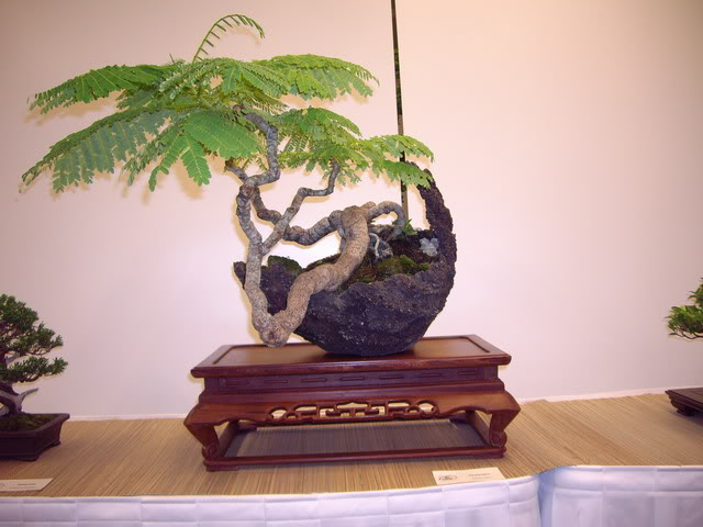 Photos of 6th World Bonsai Convention in PR IMGP6183_resize