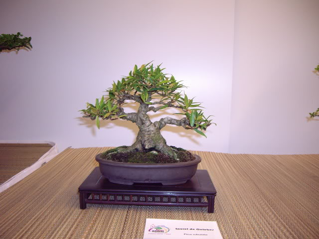 Photos of 6th World Bonsai Convention in PR IMGP6188_resize