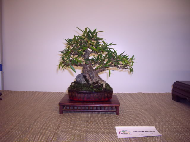 Photos of 6th World Bonsai Convention in PR IMGP6192_resize