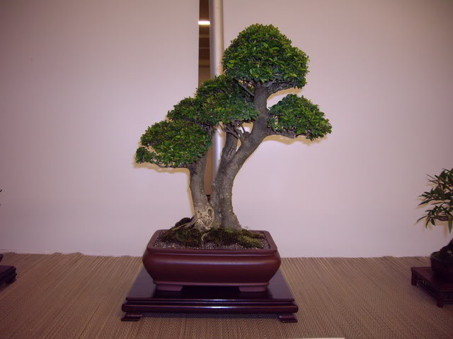 Photos of 6th World Bonsai Convention in PR IMGP6193_resize