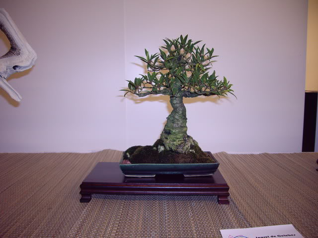 Photos of 6th World Bonsai Convention in PR IMGP6194_resize