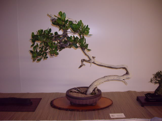 Photos of 6th World Bonsai Convention in PR IMGP6195_resize