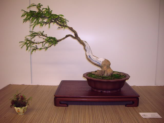 Photos of 6th World Bonsai Convention in PR IMGP6196_resize