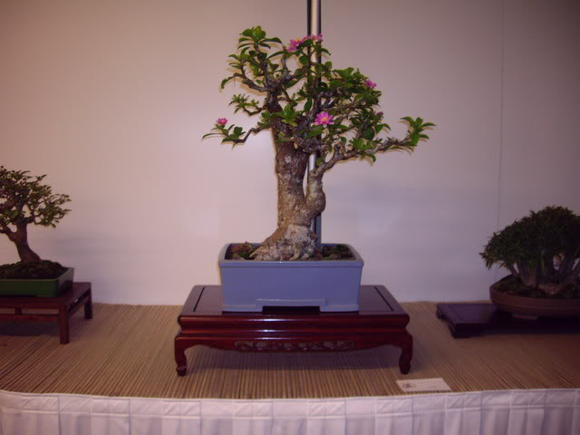 Photos of 6th World Bonsai Convention in PR IMGP6198_resize