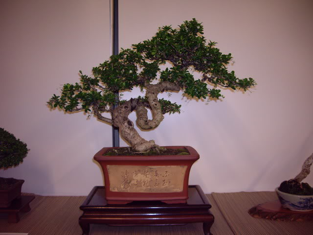 Photos of 6th World Bonsai Convention in PR IMGP6203_resize