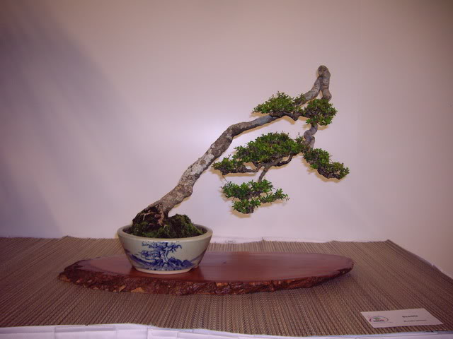 Photos of 6th World Bonsai Convention in PR IMGP6204_resize