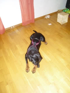 Linker til nettbutikker med hundeutstyr - Page 2 CIMG0777