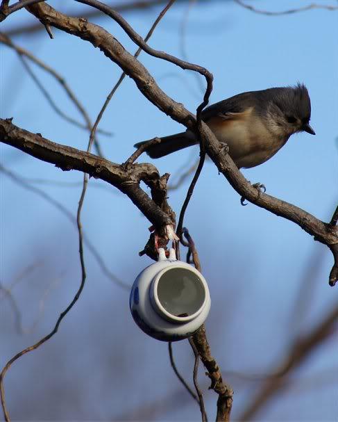 Josh's Project Bird Feeder Watch Titmouse-1