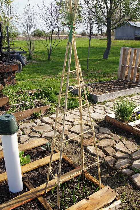 What would you say if I told you how to make a raised  bed garden at $0.00 cost Dsc07502_zps4936a0a6