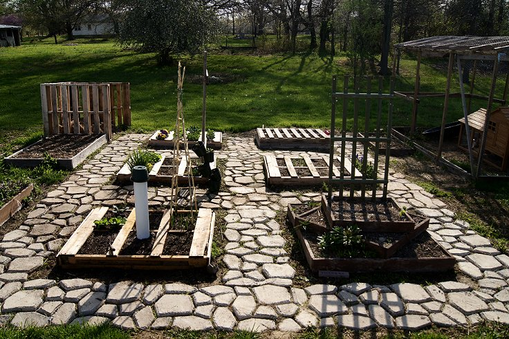 What would you say if I told you how to make a raised  bed garden at $0.00 cost Dsc07507_zps45284b46