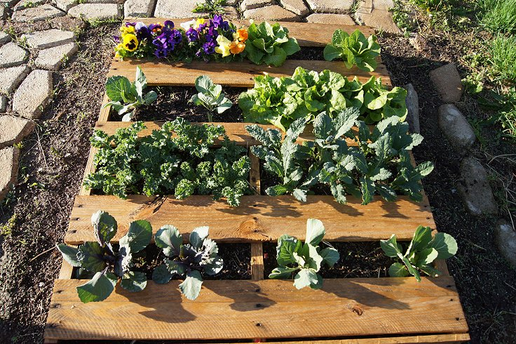 What would you say if I told you how to make a raised  bed garden at $0.00 cost Dsc07517_zpsf8935736