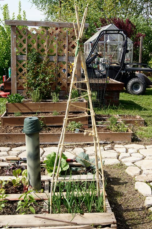 What would you say if I told you how to make a raised  bed garden at $0.00 cost Dsc07677_zps1d73b16b