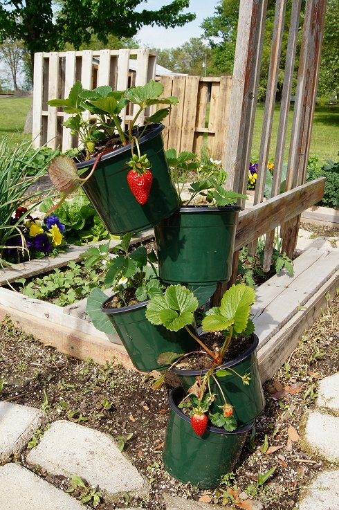 What would you say if I told you how to make a raised  bed garden at $0.00 cost Dsc07679_zpsc75b9a1e