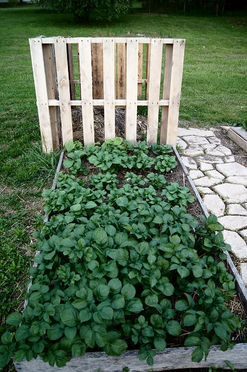 What would you say if I told you how to make a raised  bed garden at $0.00 cost Dsc07688_zpsddd7e24a