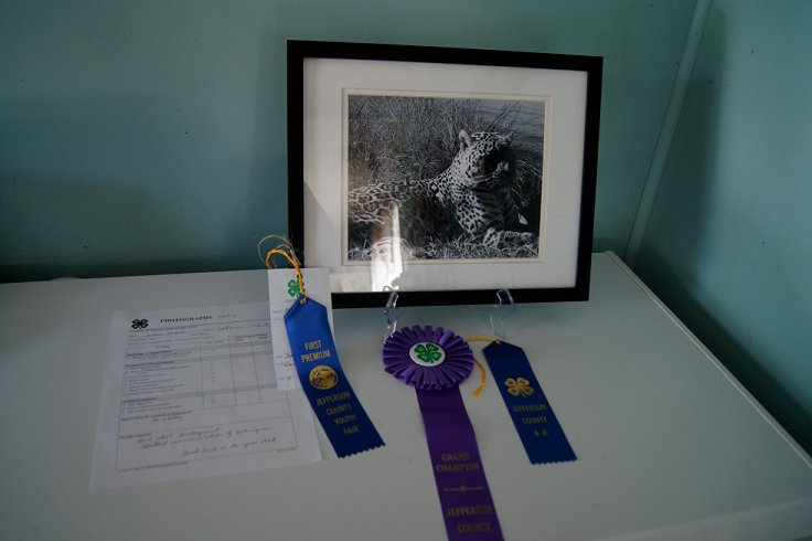 Won at the 4-H and county fair! Dsc08411_zps8f0eb6a7