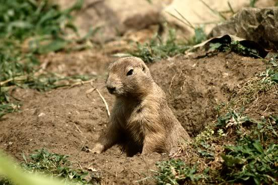 Did he see his shadow today? Groundhog