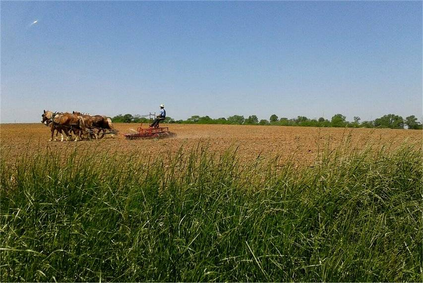 Plowing the old way Springplow_zps225d3755