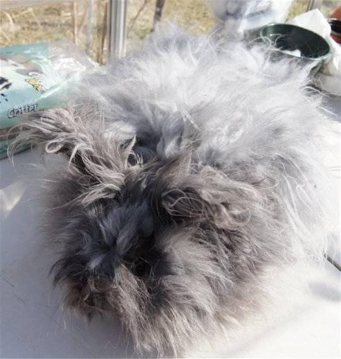 Alf ready for a hair cut! Alf2-23-13_zpsb171789a