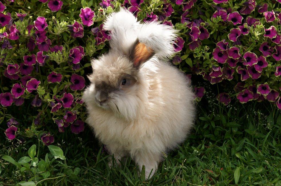 New rabbits CoCo