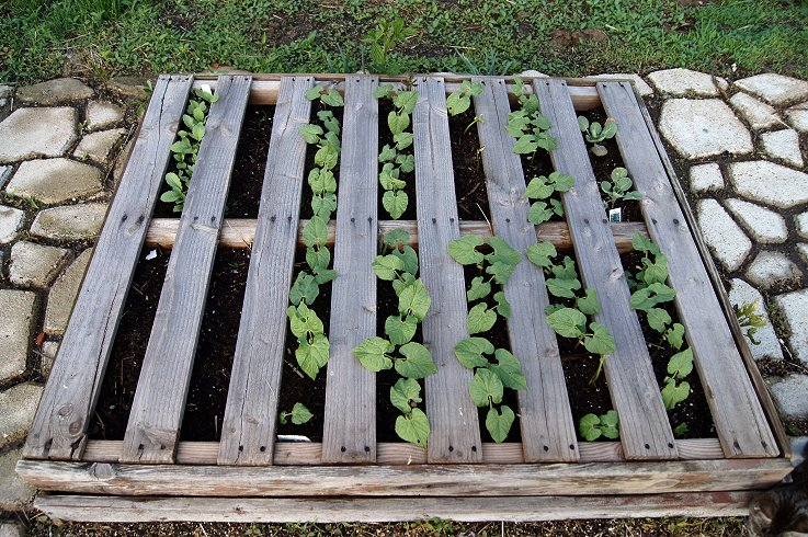 What would you say if I told you how to make a raised  bed garden at $0.00 cost Dsc07731_zps962057d4